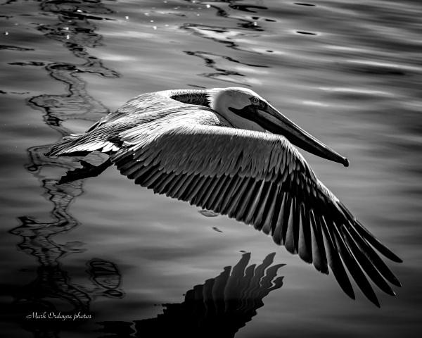 Black and White Photo by mordoyne