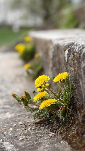 wall flower by Schreima