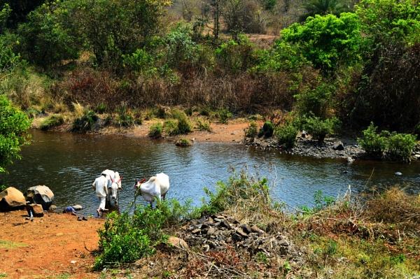 A village river scenery by kingmukherjee