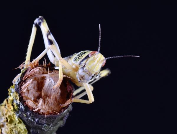 locust by Stu74
