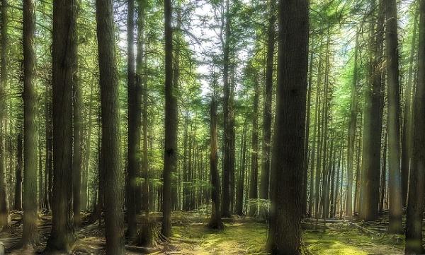 Verdant Forest by guitarman74uk