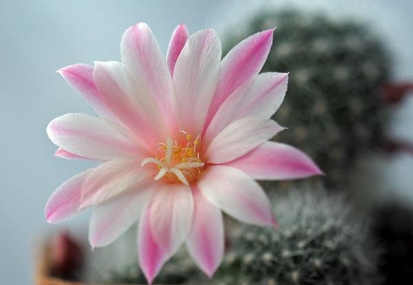 Cactus by adrian_w