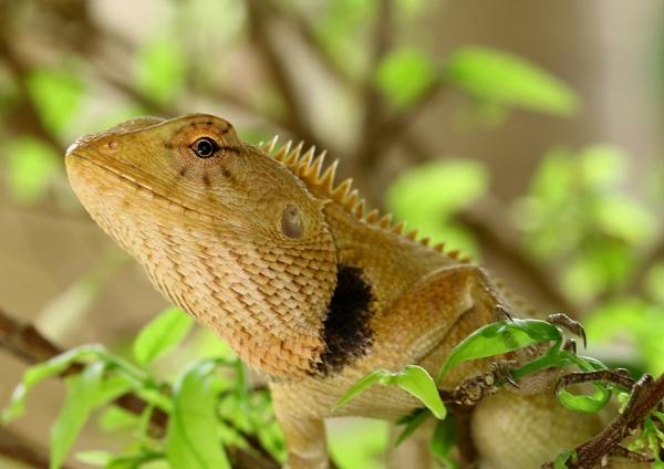 Lizard by colin beeley