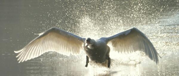 Splish Splash here I Come by SUE118