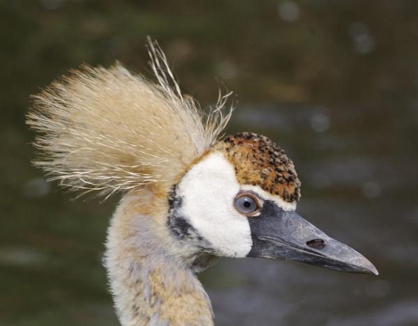 Bad hair day by AlanFairhurst