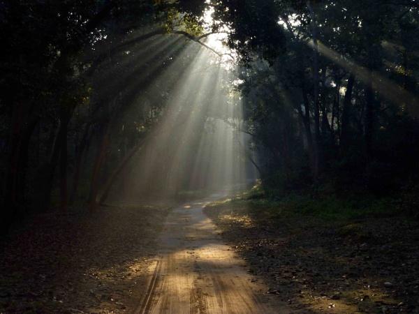 spot light by mondaldebasis30