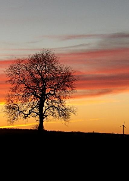 My Favourite tree at sundown. by barn yard