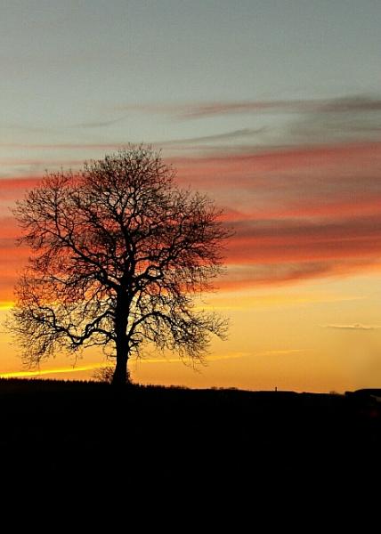 My favourite tree at sundown 2 by barn yard