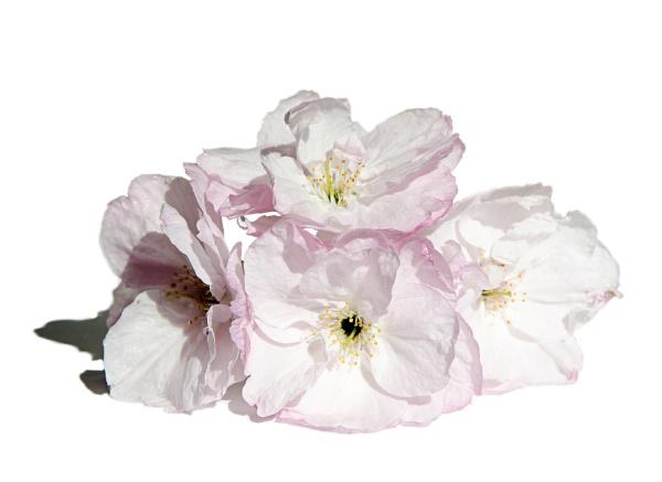 Spring by Alda