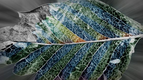 Leaf Skeleton by Mototaur