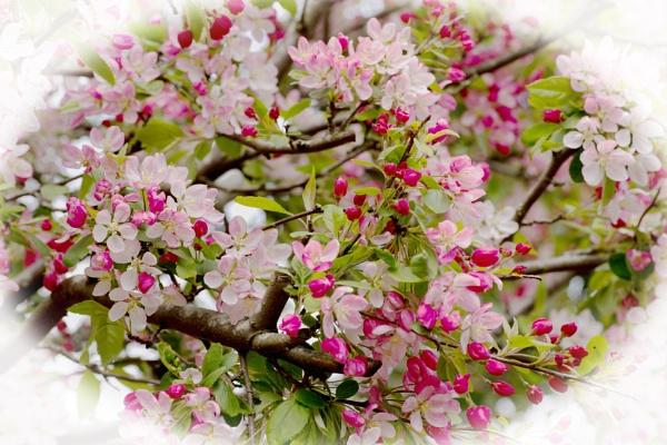 Spring by LinBrennan
