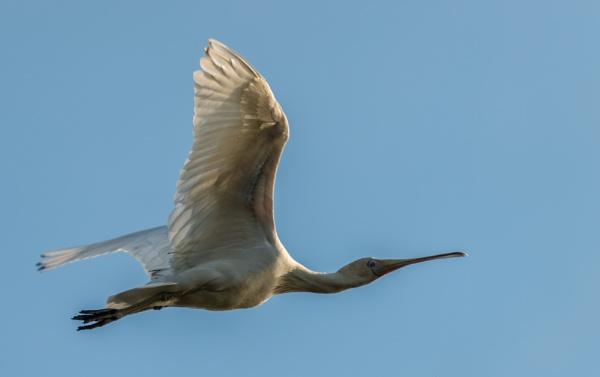 Fly by by Heyneker