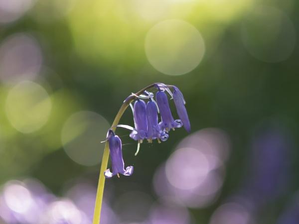 Springtime Sunshine by stubyles