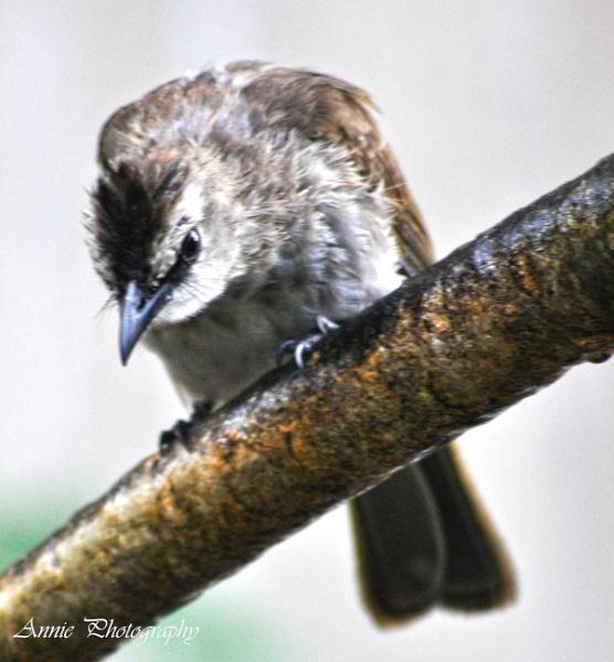 wild bird by Annie_photography