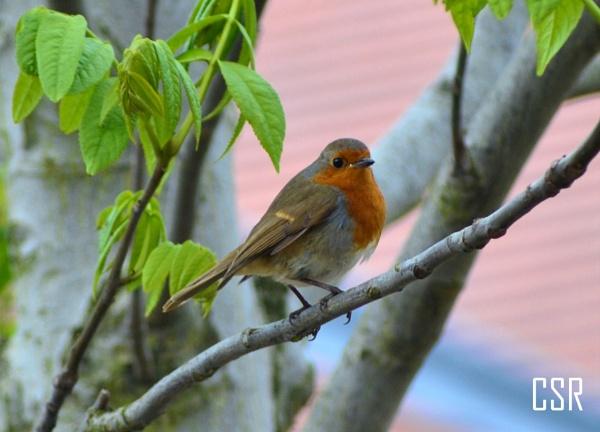 Robin by xGei8ht