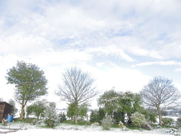 snowy morn by alixzan