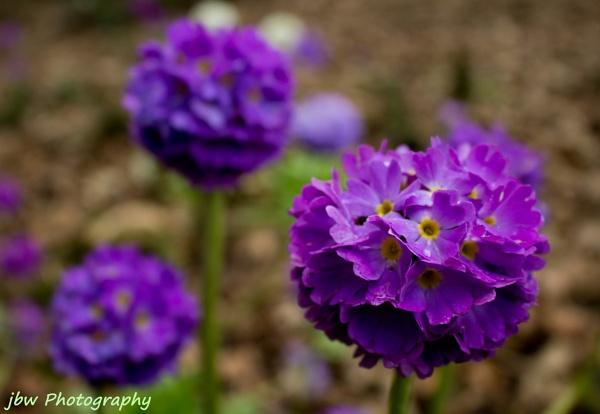 Springtime by Jodyw17
