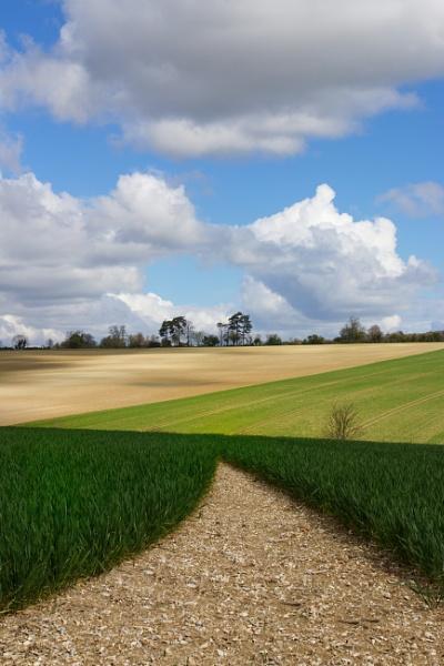 Fields by marktc