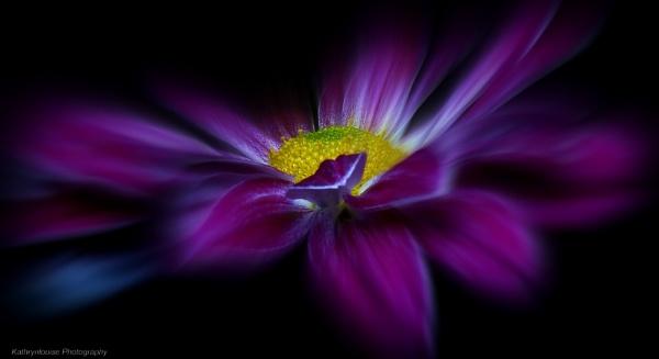 Purple Haze. by kathrynlouise