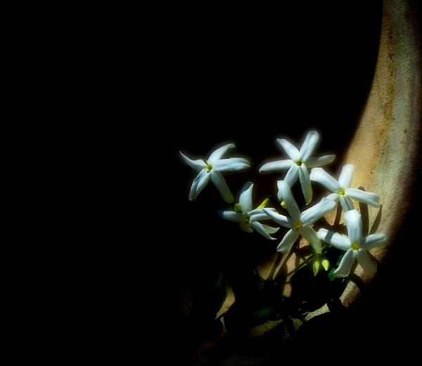 Flora Terrecotta