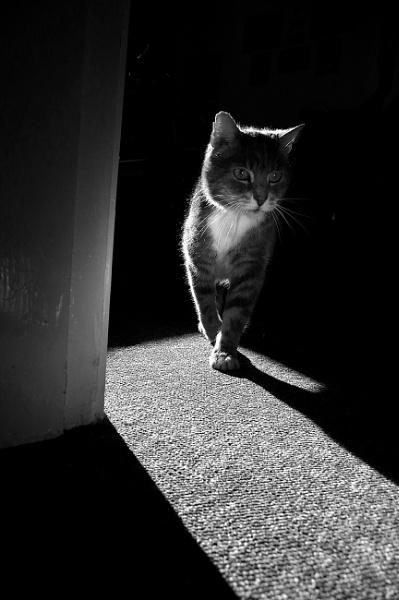 Cat noir by turniptowers