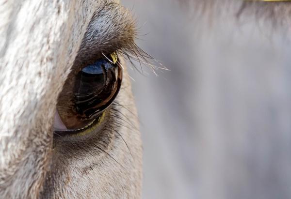 Bull\'s eye view by AlanJ