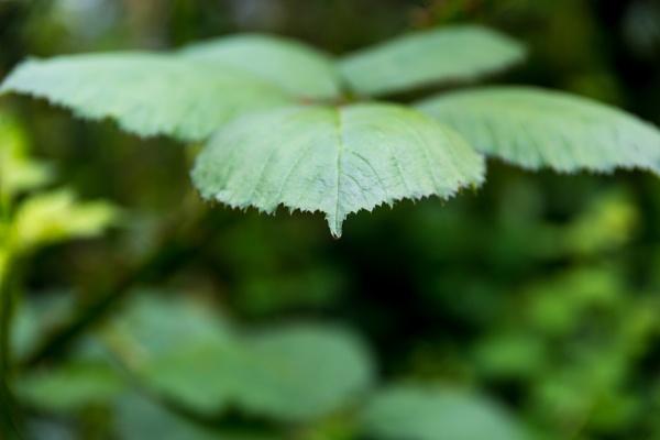 Leaf by rninov