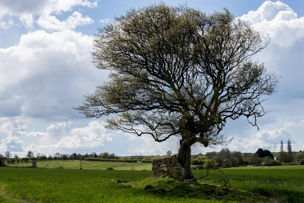 Lone Tree by feen96