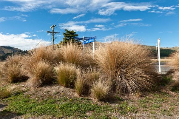 Tussock Grass by NevJB