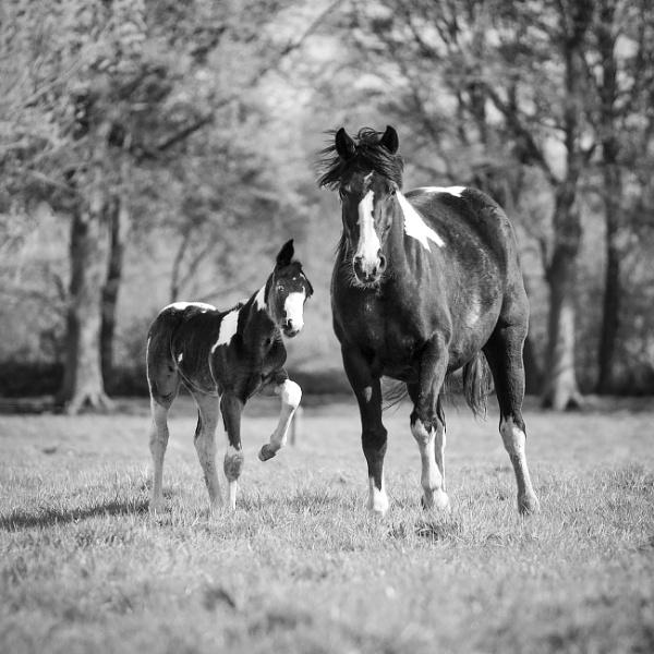 Sweet Horses by Drummerdelight