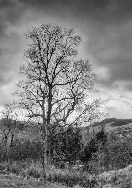 Lonesome Tree by Umberto_V