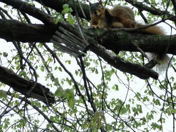 Crazy Squirrel by jube1969