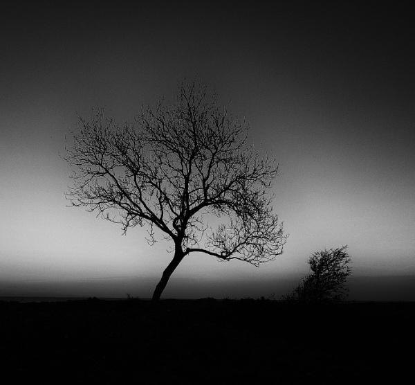 Tree by the Beach by Backabit