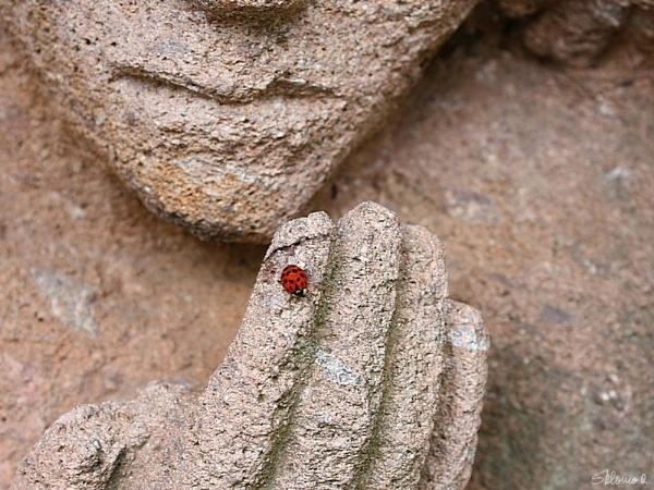 Ladybug by SHR