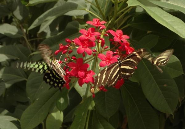 Butterflies Feeding by bwarnke