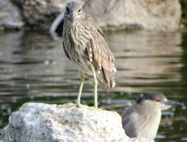 Bird Portrait by bwarnke