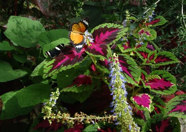 Butterfly Royalty by bwarnke