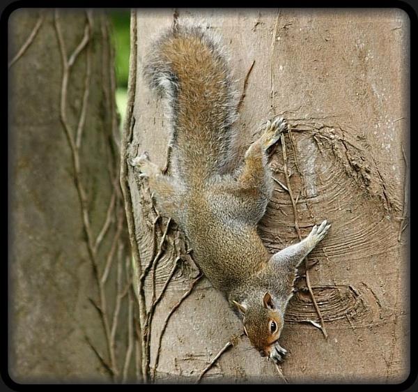 BatSquirrel by HobbitDave