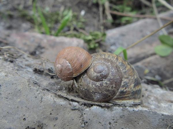 sleepy snails by alixzan