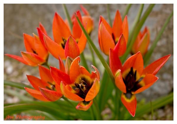 Spring Colour by Jodyw17