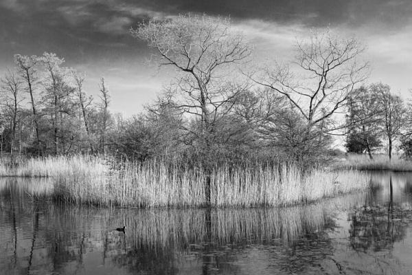 Spring pond Svendborg by alansnap