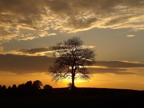 My Favourite tree. by barn yard