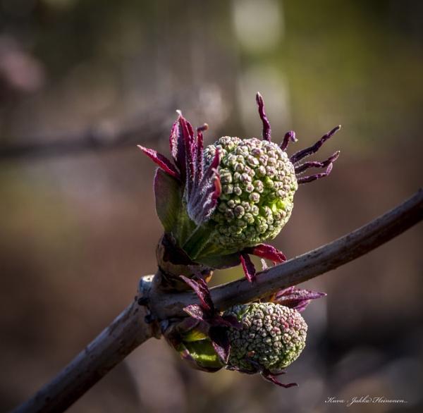 Seasonal macros. by Jukka
