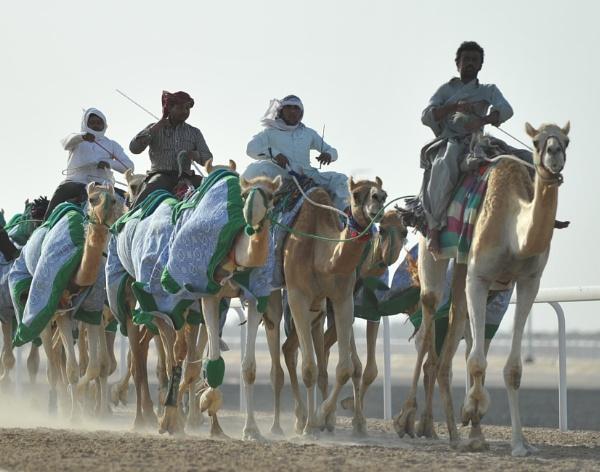 Camel training by cozzmic