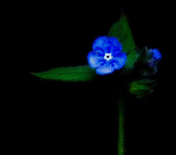Forget me not by Alda