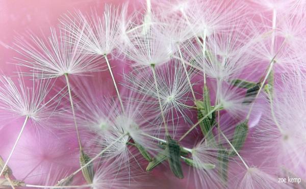 Make a wish by ZoeKemp