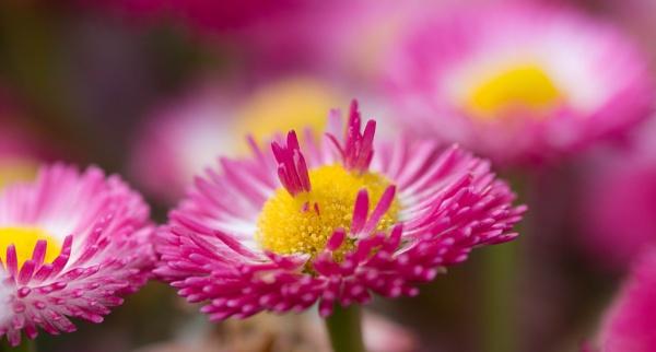 Flower by Danny1970