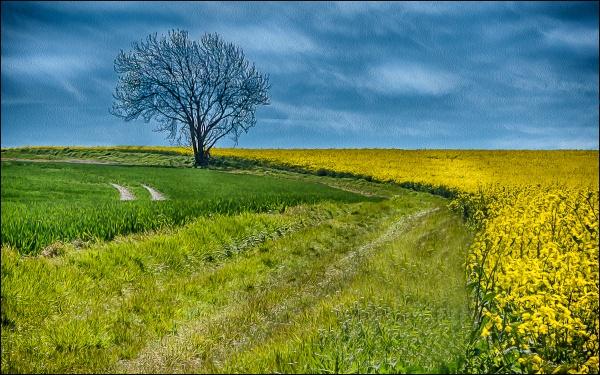 Lonely Tree by biglog