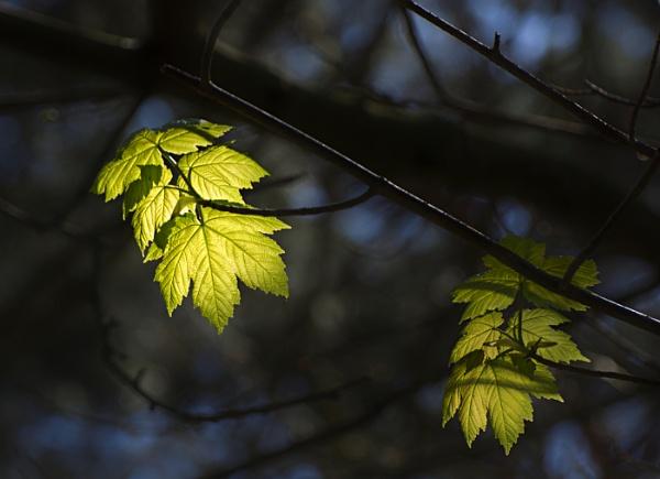 Spring Greens by BigAlKabMan