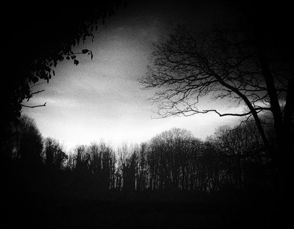 The woods at Garlieston by Backabit